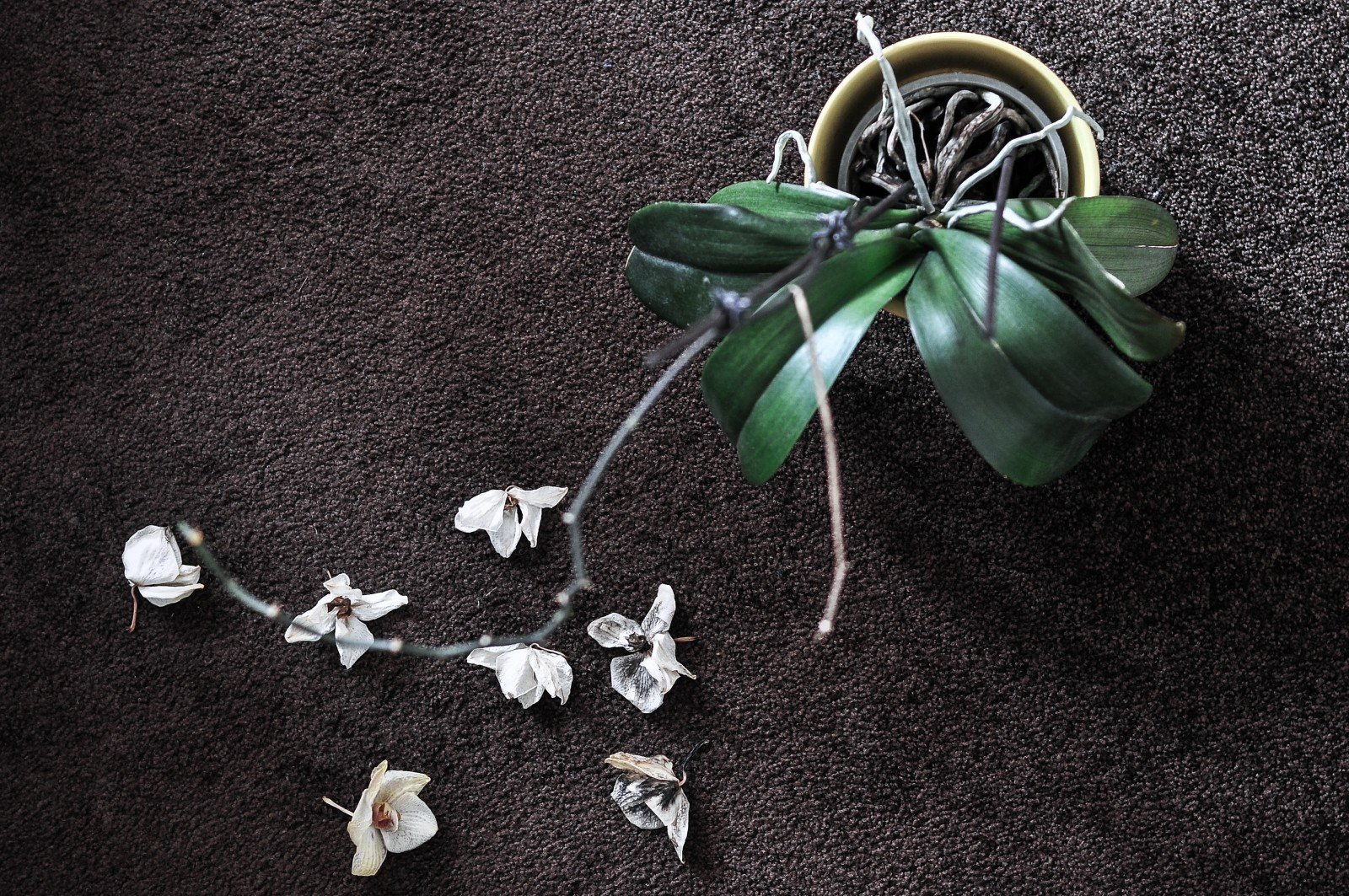 wrongful death wilted flowers