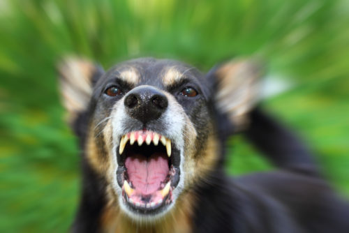 Can a Florida Personal Injury Lawyer Help if You're Attacked by a Dog in Boca Raton?